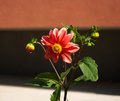 Free Bright Red Flower On Summer Day Royalty Free Stock Photos - 44403618