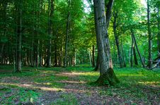 Free Forest Landscape In Summer Stock Photography - 44403622