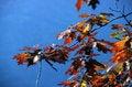 Free Autumn Stock Photography - 4451502