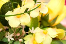 Free Yellow Flower Background Royalty Free Stock Image - 4451046