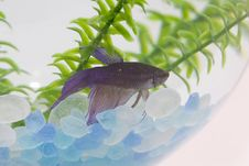 Free Fish In Tank Royalty Free Stock Photos - 4451088
