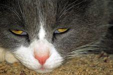 Free Cat Stock Photo - 4451090