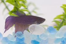 Free Fish In Tank Stock Photo - 4451110