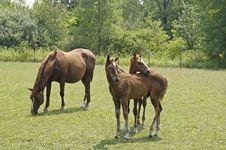 Free Horses 5 Stock Photos - 4452523