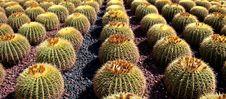 Free Row Of Cactus Stock Photos - 4452593