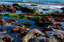Free Rocks With Sea Grass Stock Photography - 4453612