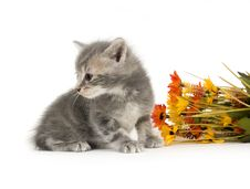 Kitten And Flowers Stock Images