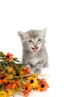 Free Gray Kitten And Flowers Stock Photo - 4454480