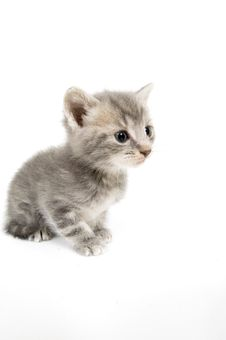 Free Gray Kitten With 15mm Lens Stock Photography - 4454482