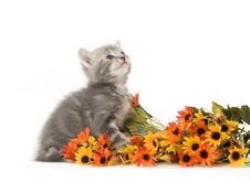 Free Gray Kitten And Flowers Stock Photos - 4454483