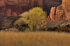 Free Zion Canyon Stock Image - 4454531