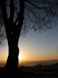 Free Sunset Hiding Behind The Tree Royalty Free Stock Images - 4454589