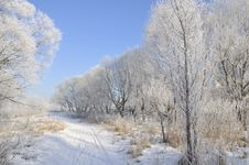 Free Winter Forest And Blue Sky Royalty Free Stock Images - 4455599