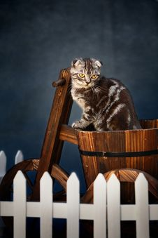 Free Cat Stock Photos - 4456913