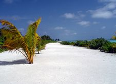 Free White Sand Beach Royalty Free Stock Photography - 4458657