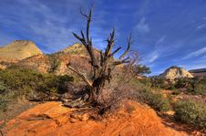 Free Zion National Park Stock Images - 4458694