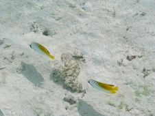 Free Fish In Paradise Island, Maldives Royalty Free Stock Image - 4458776