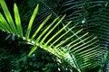 Free Leaf In Sunshine Stock Image - 4466421