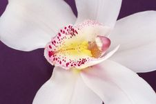 Free Close Up Of  White Orchid On Purple Satin Stock Photos - 4460043