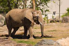 Free Elephant Stock Images - 4461584