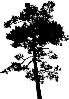 Free Isolated Tree - 14. Silhouette Royalty Free Stock Photo - 4462985