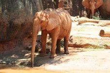 Free Elephant Drinking Royalty Free Stock Image - 4463206