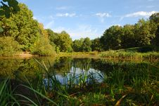 Free View Of Lake And Forest Stock Images - 4464504