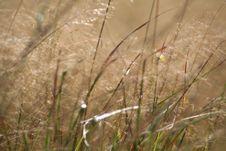 Free Grassy Meadow Royalty Free Stock Photos - 4466048