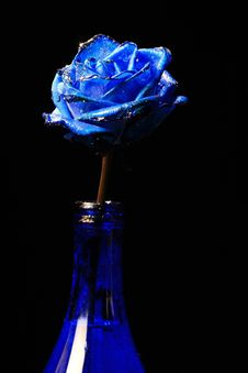 Free Rose 2 Royalty Free Stock Photo - 4467545