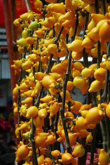 Free Golden Fruit Stock Photo - 4467900