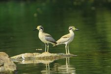 Free Herons Stock Images - 4467954