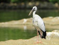 Open Bill Stork Royalty Free Stock Photos