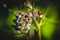 Free Ladybird Royalty Free Stock Photo - 44630305
