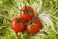 Free Red Tomatoes On Green Leaf Lettuce Stock Images - 4474694