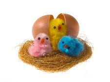 Free Easter Chickens And Egg In Nest Stock Images - 4470164