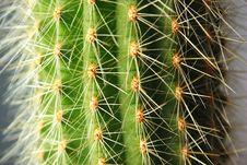 Free Cactus Needles Stock Images - 4470584