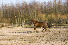Free A Brown Running Horse Stock Photography - 4470672