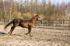 Free A Brown Running Horse Royalty Free Stock Image - 4470676