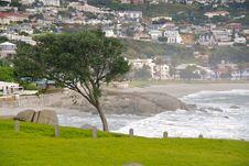 Free Windblown Tree Stock Photos - 4471293