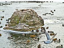 Free Winter Lake Stock Photography - 4471362