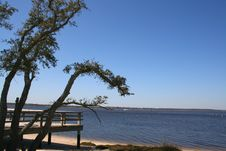Free Tree And Deck At Shore Royalty Free Stock Photography - 4471407
