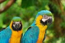 Free Colorful Parrot Royalty Free Stock Image - 4471896