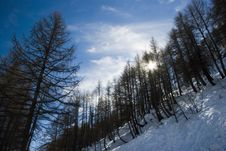 Free LaThuile, Snow, Trees And Slop Royalty Free Stock Image - 4474336