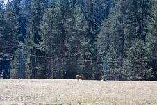 Free Dog At The Sport Field Royalty Free Stock Photo - 4474345