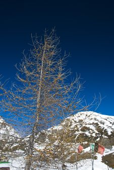 Free LaThuile, Snow, Trees And Slop Royalty Free Stock Image - 4474386