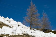 Free LaThuile, Snow, Trees And Slopes Royalty Free Stock Images - 4474469