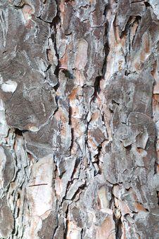 Free Pine-tree Bark. Royalty Free Stock Photo - 4475195