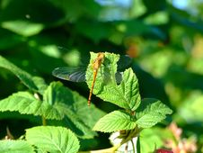 Free Dragonfly Close Up Stock Photo - 4475630