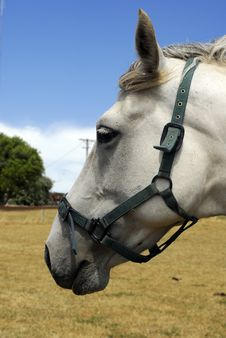 Free Close Up Of A Horse Royalty Free Stock Photography - 4477017