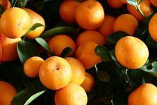 Free Many Oranges Stock Photography - 4477072